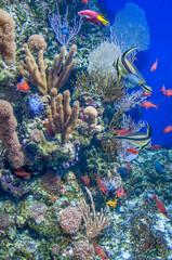 petits poissons et coraux multicolors