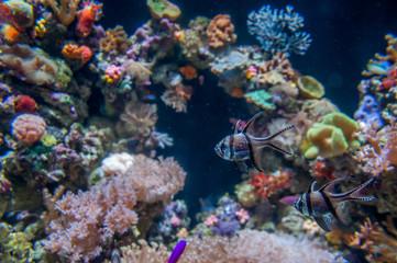 petits poissons et coraux multicolores