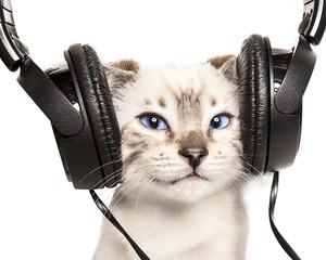 gatto sorridente ascolta la musica