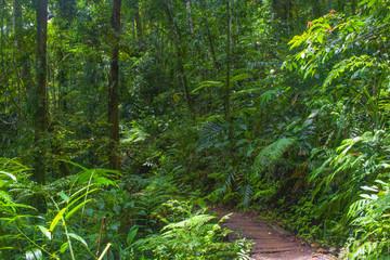 Asian rainforest