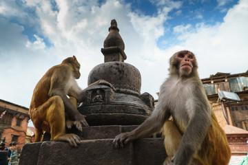 Autocollant pour porte Delhi Templo de los monos katmandu