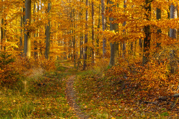 Forest paths in autumn colors in the Tricity Landscape Park, Gdansk, Poland