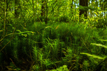 Saturated greens in the forest