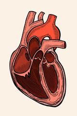 vector engraving heart