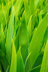 Photo of many green flower leaves, nature background