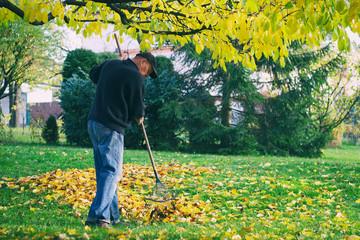man raking fallen leaves in the garden, senior man gardening during autumn season, cleaning lawn in backyard under a tree