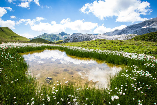 water with cottongrass