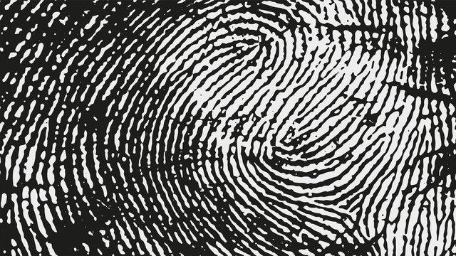 Original fingerprint pattern. Black stripes on white background.