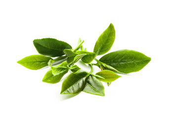 Green tea leaf isolated on white background, Fresh tea leaves on a white background