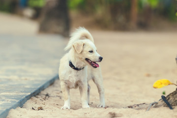 Balinese street dog on the beach of Bali island, Indonesia.