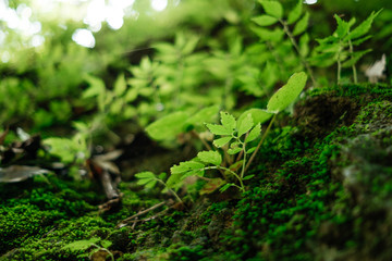 closeup small green plants growing on the rock with a natural around them are background.  image for nature, tree, forest, garden concept