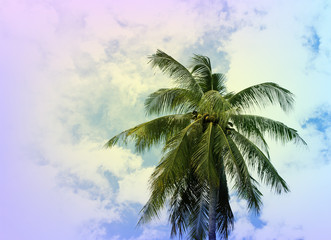 Coco palm tree crown on cloudy sky. Tropical nature vintage toned photo.