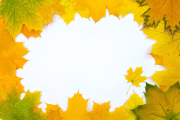 Maple leaves frame.  Frame of yellow canadian maple leaves on white background