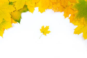 Maple leaves border.  Border of yellow canadian maple leaves on white background