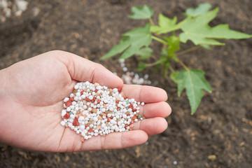 fertilizer on farmer hand