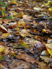 Blätter auf dem Weg