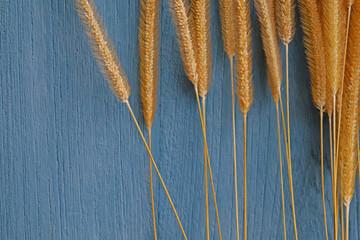 dry grass flower on blue wooden background