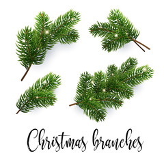 Set of fir branches. Christmas tree, pine. Realistic detailed vector illustrations. Symbol of Christmas and New Year isolated on white background for your design. EPS10
