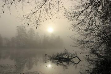 idyllische Licht Stimmung mit Nebel und Sonne