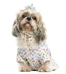 Dressed-up Shih Tzu wearing a diadem sitting, 4 years old, isola