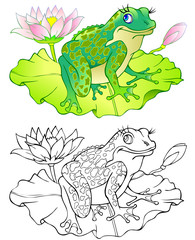Colorful and black and white pattern of frog.