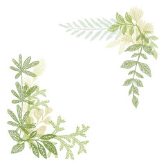 Floral hand drawing, green leaf composition. greenery branches isolated on white background. Floral border decoration elements for cards