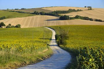 Summer landscape in Marches (Italy) near Filottrano