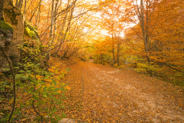 Autumn path in the forest