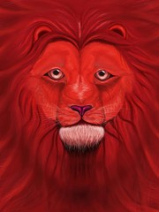 The muzzle of a lion with a fluffy red mane
