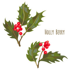 Set of Holly berry branches, red berries and green leaves, Christmas decoration plant isolated on white background, digital draw illustration in watercolor style, vector