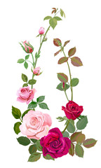 Vertical border with branch curly pink, red rose, bouquet of flowers, buds, green stems, leaves on white background, concept for design, digital draw illustration, watercolor style, vintage, vector