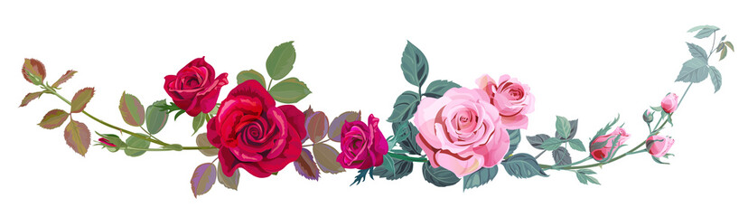 Horizontal border with branch curly pink, red rose, bouquet with flowers, buds, green stems, leaves on white background, digital draw illustration, concept for design, vintage set, vector
