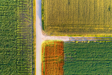 Agricultural fields shoot from drone