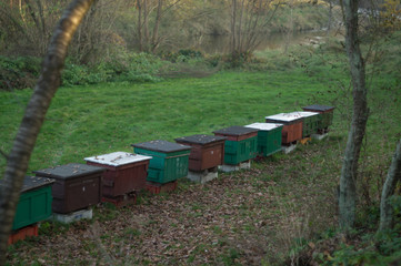 beehive in the countryside
