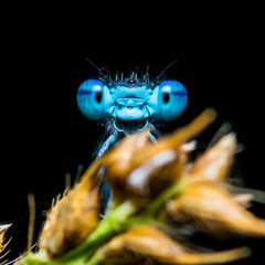 Funny Smiling Blue Dragonfly Insect on Dark Background