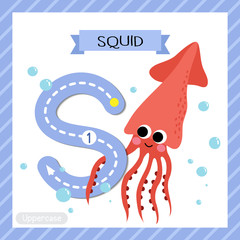 Letter S uppercase cute children colorful zoo and animals ABC alphabet tracing flashcard of Squid for kids learning English vocabulary and handwriting vector illustration.
