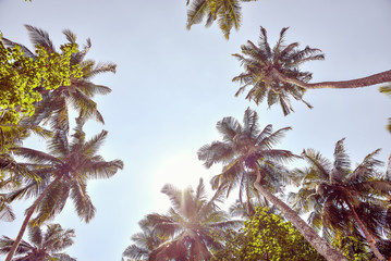 tall palm trees against the sky with the sun