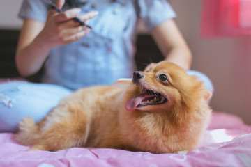 Cheerful asian young teen girl playing and happy fun with her dog at home,feeling happy and smiling face