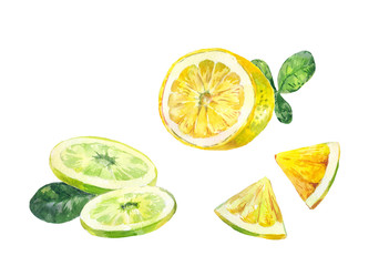 Cut slices of lemon, bergamot or lime on a white background. Illustration painted with watercolors.