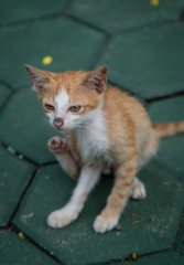 Stray kitten in temple