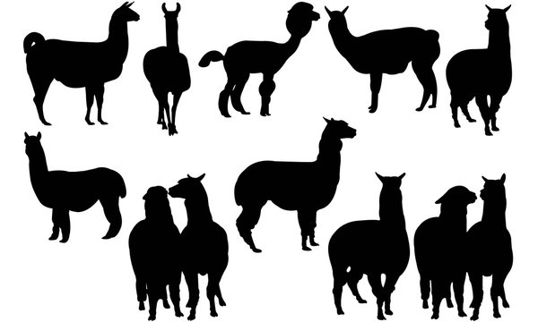 Alpaca Silhouette Vector Graphics