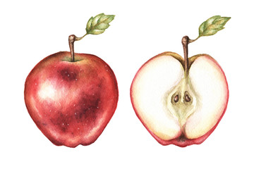 Watercolor red apple pair illustration in high resolution.