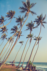 tall palm trees on the shore of the Indian Ocean