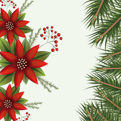christmas colorful poinsettia flowers and pine branches on white background