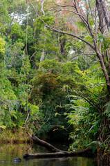 Masoala National Park landscape, Madagascar