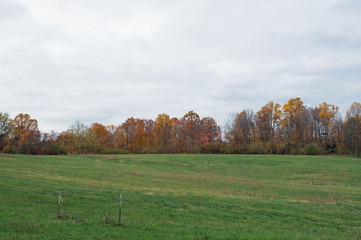 Rural landscape photo of a green, grassy meadow lined with trees bearing bright Autumn colors