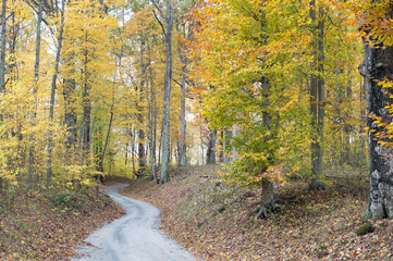 Autumn landscape photo of a narrow lane winding through the Autumn colored forest
