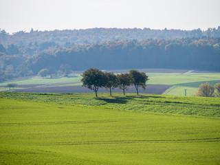 Baumgrundstück im Herbst