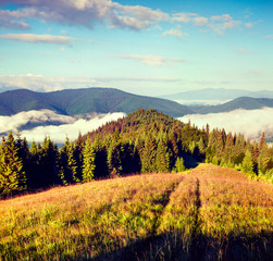 Sunny summer morning in the Carpathian mountains