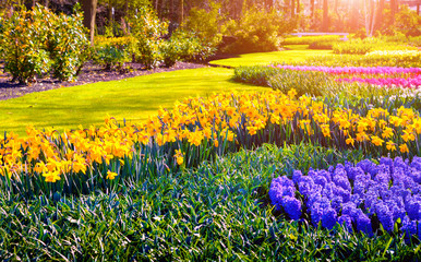 Colorful spring sunset in Keukenhof gardens